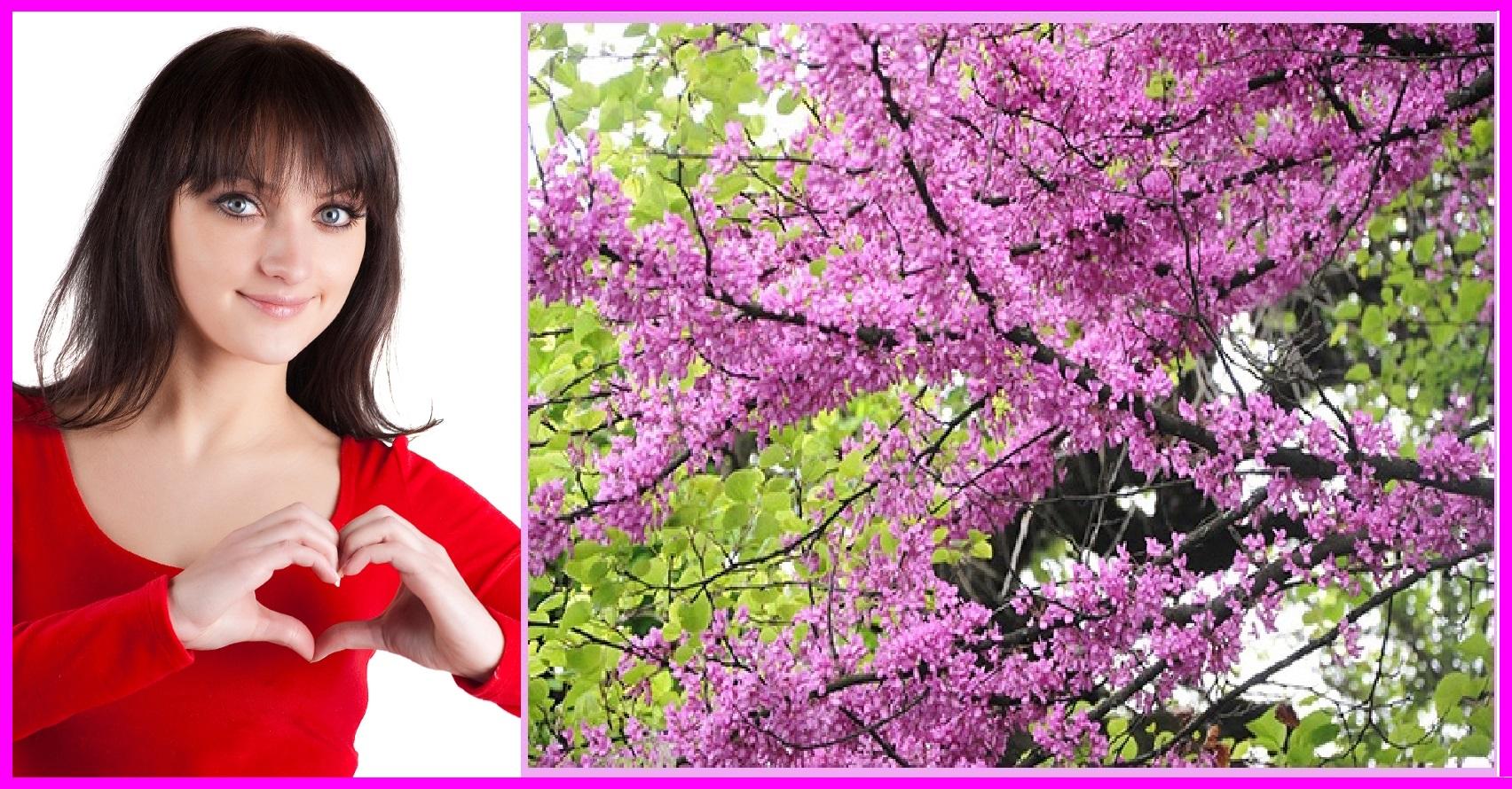 411d7c302c196 Kalp ve dolaşım sistemine Erguvan rengi ve ağacı yararlıdır ...